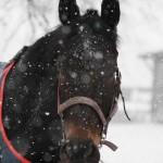 Seidnitzperle im Schneegestöber